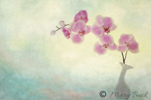 Ikebana Award Winning Fine Art Photograph