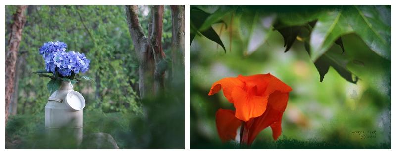 floral photographs DSLR Photography Composition
